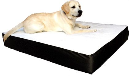 Majestic Pet Large 34 x 48 Orthopedic Double Dog Pet Bed