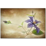 "Trademark Fine Art 22x32 inches ""Clematis Lanuginose"" Philippe Sainte-Laudy at Sears.com"