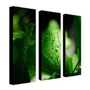 "Trademark Fine Art Three 8x24 inch pieces ""Green Pearl"" Philippe Sainte-Laudy at Sears.com"