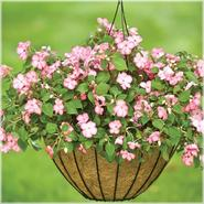 "Cobraco Growers Style 16"" Hanging Basket - White at Kmart.com"