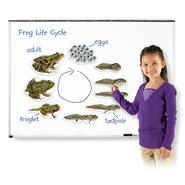Learning Resources Giant Magnetic Frog Life Cycle at Kmart.com