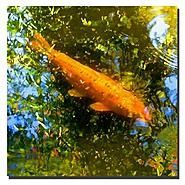 Trademark Fine Art Amy Vangsgard 'Koi Fish' Canvas Art at Kmart.com