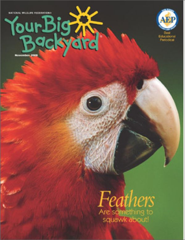 your big backyard magazine books magazines magazines