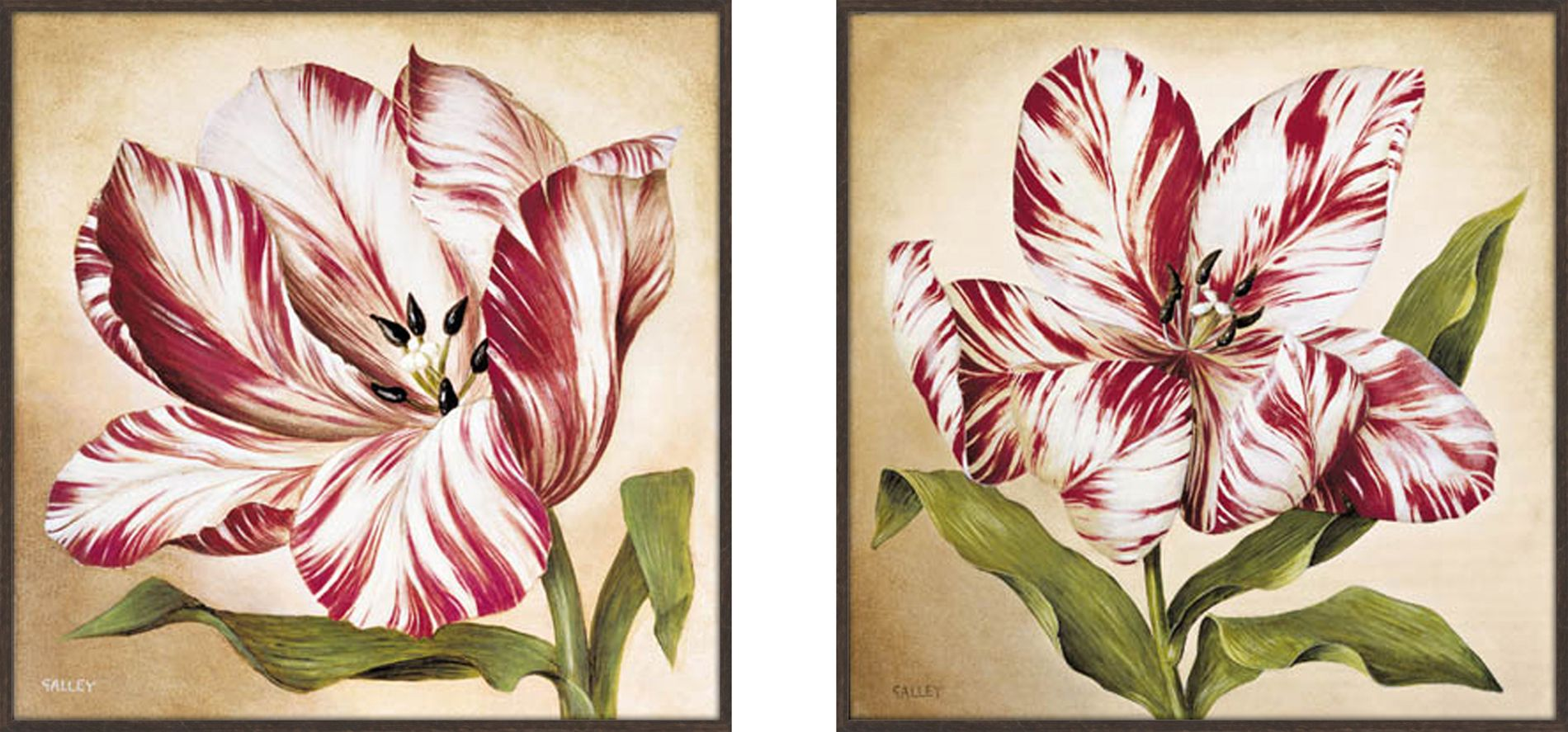 Stripey Tulip set of 2