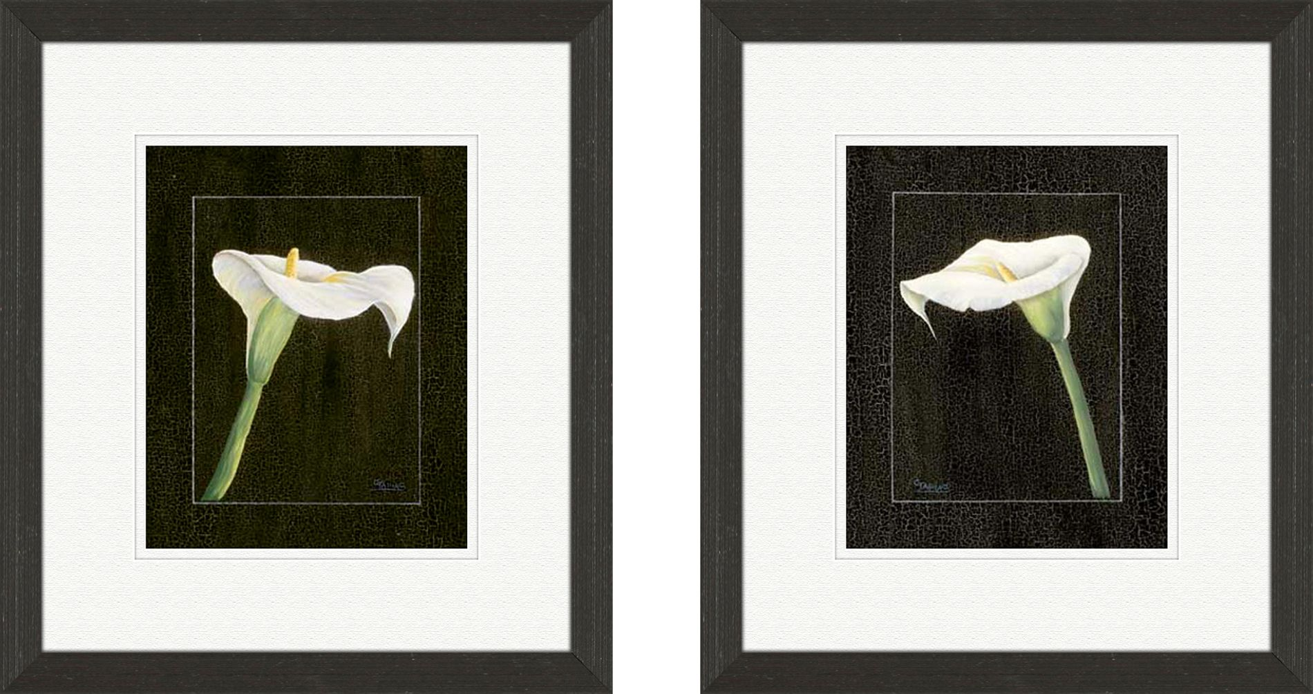 Midnight Calla set of 2