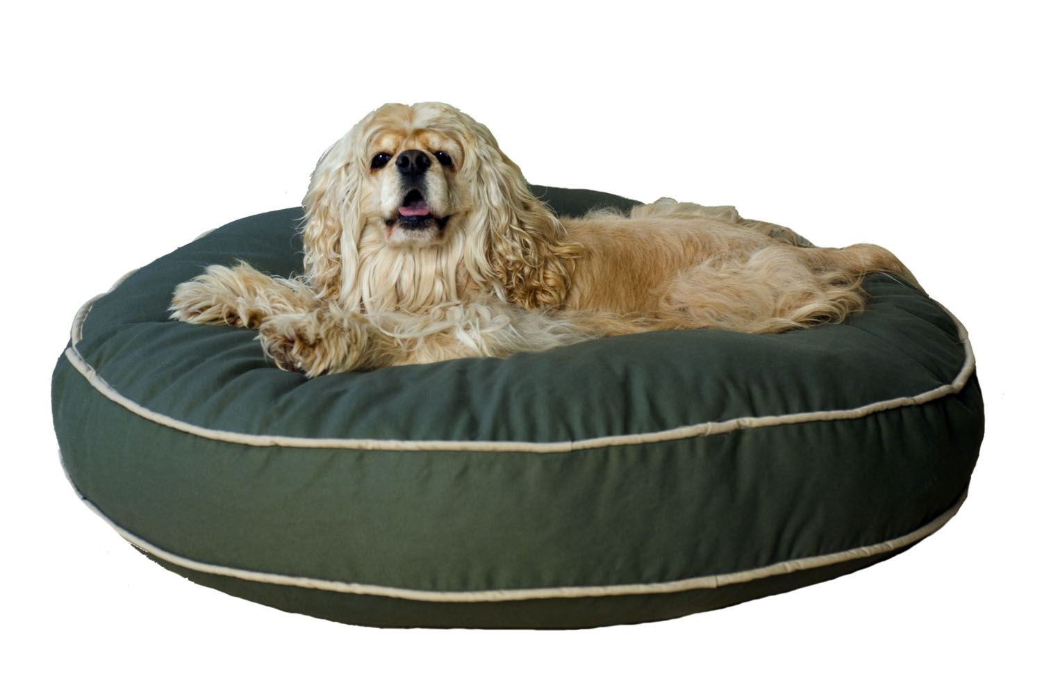"Carolina Pet Large Classic Twill ""Round-A-Bout"" - Sage"