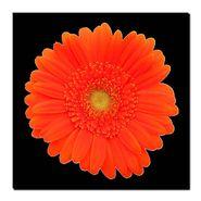 """Orange Gerber Daisy"" at Kmart.com"