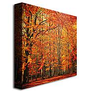 Trademark Fine Art 35x35 inches Philippe Sainte-Laudy 'Red November' Canvas Art at Sears.com