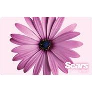 Pink Gerber Daisy eGift Card at Sears.com