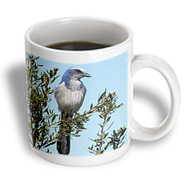 3dRose - Danita Delimont - Birds - Florida. Scrub Jay bird - NA02 AJE0252 - Adam Jones - 11 oz mug at Kmart.com