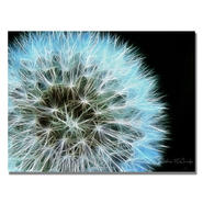 Trademark Fine Art Kathie McCurdy 'Dandelion Seed Head Full' Canvas Art at Sears.com