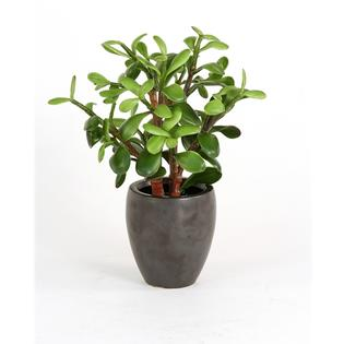 Ddi 2632-2 Silk Greenery - Jade Plant in a Matte Black Metallic Plum Pot  - Pack of - 2 at Sears.com
